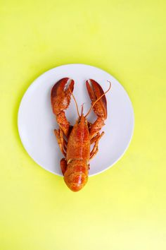 Lobster on white saucer – Food – Nutrition Education Quotes King Brown Plates, Grey Bowls, Brown Cups, Free Food Images, Instagram Feed, Simple Iphone Wallpaper, Types Of Sushi, Leaf Vegetable, Fruit Slice