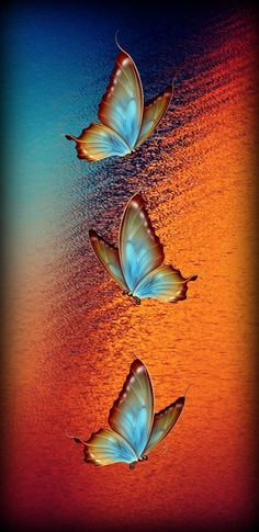Butterflies - Best of Wallpapers for Andriod and ios Butterfly Background, Butterfly Wallpaper, Butterfly Art, Homescreen Wallpaper, Cellphone Wallpaper, Wallpaper Backgrounds, Dolphin Art, Butterfly Pictures, Most Beautiful Wallpaper