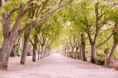 travel photography, lisbon photography // by twiggs photography