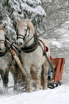 horse winter snow