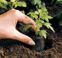 Curso de hortas orgânicas #3 e #4: semeadura, germinação e transplante de mudas