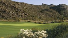 Luxuriously blended desert and design at The Golf Club at Dove Mountain. #Golf #RoccoRealtyGroup #OV #cactus
