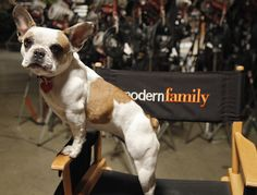 """Beatrice the French Bulldog was a member of the cast of """"Modern Family"""", a TV sitcom that began in Beatrice has played the role of """"Stella"""" since 2012 Blue Fawn French Bulldog, French Bulldog Drawing, French Bulldog Puppies, French Bulldogs, Best Farm Dogs, Morden Family, Every Dog Breed, Family World, What Kind Of Dog"""