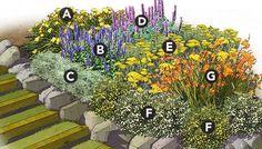 Marathon Bloomers Perennial Garden Plan Plant List A. 3 Daylily (Hemerocallis spp.), Zones 3-10  B. 5 Veronica, Zones 3-8  C. 3 Artemisia, Zones 7-9 or annual  D. 3 Agastache, Zones 6-10 or annual  E. 3 Yarrow (Achillea spp.), Zones 3-9  F. 5 Potentilla, Zones 3-7  G. 5 Crocosmia, Zones 6-9 or annual