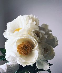 Fluffy white peonies