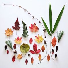 As a yoga teacher, Ja Soon Kim incorporates natural elements of the meditative practice into her beautiful creative work. In her series of botanical arrangements, Kim transforms colorful vegetation… World Photography, Creative Photography, Flower Photography, Composition, Dry Leaf, Instagram Blog, Couple Tattoos, Botanical Art, Botanical Drawings