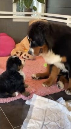 Cute Little Animals, Cute Funny Animals, Funny Dogs, Cute Cats, Cute Animal Videos, Cute Animal Pictures, Gato Gif, Cute Dogs And Puppies, Doggies
