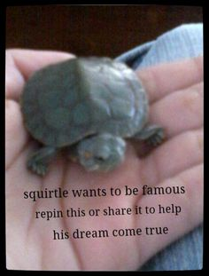 Help him he deserves it<<< awww squirtle!