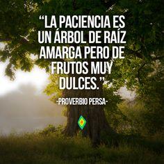 La paciencia es un árbol de raíz amarga pero de frutos muy dulces.