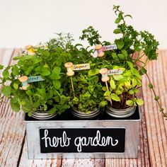 DIY Herb Garden and Plant Markers from @jcarter751