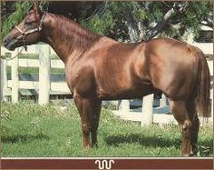 Mr San Peppy..this is my horses great grandfather!