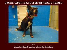 ***SUPER URGENT!!!*** - PLEASE SAVE BETH!! - EU DATE: 3/19/2015 -- Beth Breed:Boston Terrier (mix breed) Age: Young adult Gender: Female Size: Small Location: Kaplan, LA  Read more at http://www.dogsindanger.com/dog/1425991076984#W6RUzpAT3qww9JJK.99 - If you have any questions please contact us at animalaidvermilion@gmail.com or (337) 366-0212 or visit our website animalaidvermilionarea.com for more information