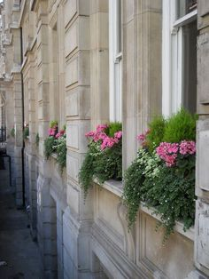 ".lemon cypress, helichrysum, geranium, bacopa. Urban ""garden"".....pretty window boxes"