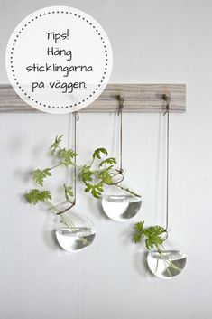 Som växtnörd har man sticklingar mest överallt. Ett tips är att hänga upp dem på väggen. Snyggt och praktiskt. Room With Plants, House Plants, Diy Interior, Interior Decorating, Boho Living Room, Plant Decor, Frames On Wall, Boho Decor, Indoor Plants