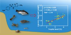Antibiotic Pollution in Marine Food Webs in Laizhou Bay, North China: Trophodynamics and Human Exposure Implication