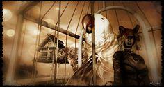 Cage by ಌ Nαкσтσ Eχσиαя ಌ, via Flickr
