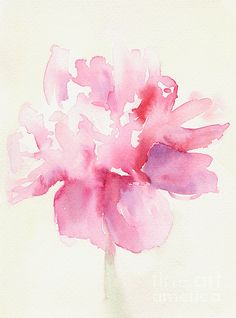 watercolor peony, watercolor.