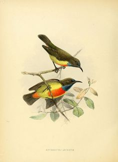 n647_w1150 by BioDivLibrary, via Flickr