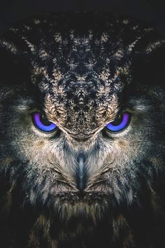 Antares, a Eurasian eagle-owl. Pet of Scorpius Hyperion Malfoy. Owl Photos, Owl Pictures, Birds Photos, Beautiful Owl, Animals Beautiful, Eurasian Eagle Owl, Owl Artwork, Owl Wallpaper, Owl Tattoo Design