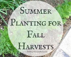 Have you planted a good crop or container garden this year, but kind of wish you could have planted more? It's not too late, you can still plant some quick growing vegetables to harvest this …
