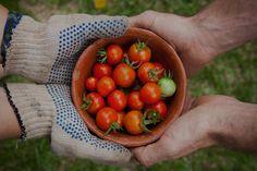 Blog en español sobre comida 100% orgánica, del campo a tu mesa con PlenEAT ¡Síguenos y come mejor y más sano!