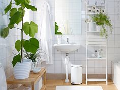 8 Shower Plants That Want To Live In Your Bathroom Plant Wall In The Bathroom House Bathroom Plants Plants Bathroom Ikea Satsumas In 2019 House Plants Decor Pla Decor, Green Bathroom, Shower Plant, Best Bathroom Designs, Home Decor, Amazing Bathrooms, Bathroom Plants, Bathroom Decor, Bathroom Inspiration