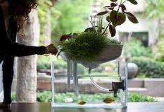 まだありました、フランス生まれの家庭用ビオトープ。デザイナーは京都に住んでいた経験もあり