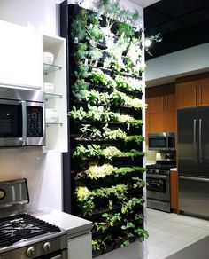 Vertical herb garden kitchen wall how to make a kitchen planter box for herbs herb wall kitchen garden Herb Garden In Kitchen, Kitchen Herbs, Spice Garden, Herbs Garden, Kitchen Ideas, Design Kitchen, Green Kitchen, Wall Herb Garden Indoor, Tropical Kitchen