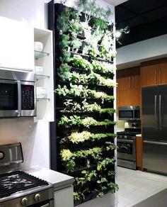 Amazing idea - indoor garden wall for herbs