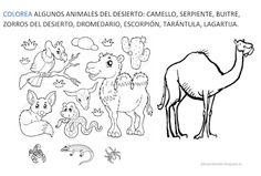15 Mejores Imagenes De Animales Del Desierto Animales Del
