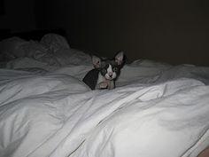 Cutest little thing!  I love Goober!