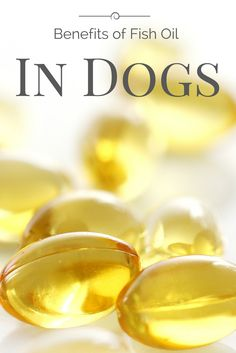 Fish oil benefits on pinterest omega 3 fish oil for What are the benefits of fish oil pills