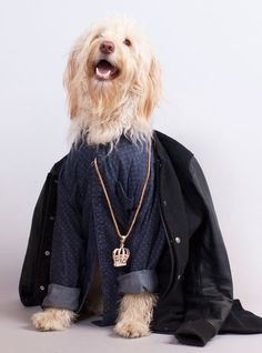 This pup knows how to accessorize!