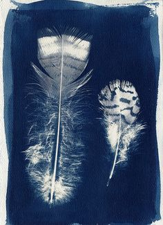 Cyanotype print directly from the feathers themselves. Even the stripes on the feathers came through. Two Feathers | Flickr - Photo Sharing!