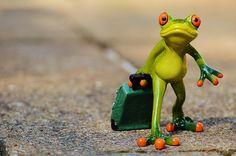 Gratis afbeelding op Pixabay - Kikker, Afscheid, Reizen, Bagage