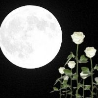 What's A Moon Garden -- Brilliant idea! Plant white flowers, shiny foliage, night-bloomers, and/or fragrant flowers for a garden to be enjoyed and seen by moonlight. (Or a lovely, cool-but-dim garden light.) This is fabulous, especially in a warmer climate!