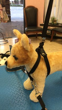 8 best dog grooming harness images dog grooming dog grooming rh pinterest com