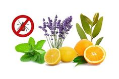 Ticks repellents and other essential oil repellents