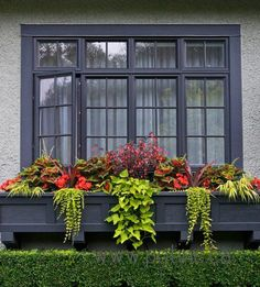 Now this is a window box! Great looking container arrangement from Pot Inc. of begonias, coleus, margarita vine, hakone grass, and creeping jenny. Window Box Flowers, Window Boxes, Flower Boxes, Window Ideas, Container Flowers, Container Plants, Container Gardening, Succulent Containers, Vegetable Gardening