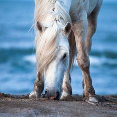 horse.. beach