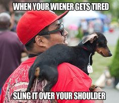 Sling the doxie
