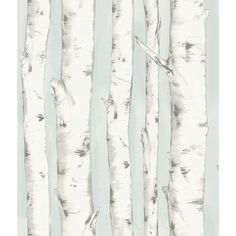 Invite the effortless beauty of nature into your home with this stunning birch tree wallpaper. With a stunning light blue background and hand painted style, this forest wallpaper has a whimsical and enchanted feel. Pioneer is a pre pasted, easy walls Tree Wallpaper Backgrounds, Tree Wallpaper Pattern, Birch Tree Wallpaper, Plant Wallpaper, Forest Wallpaper, Wood Wallpaper, Wallpaper Samples, Blue Wallpapers, Wallpaper Roll