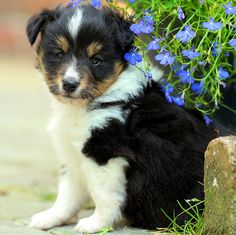 The Sweetest puppy!