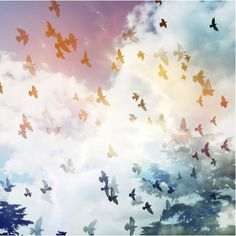 flock birds flight sky rainbow