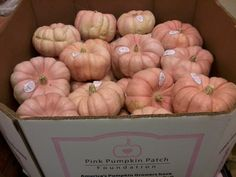The Pink Pumpkin Patch Foundation partners with local farmers to grow and sell pink pumpkins. A percentage of proceeds from every pumpkin sold will benefit breast cancer research. Pink Pumpkins, Velvet Pumpkins, Pink Fall Weddings, Porcelain Ceramics, Porcelain Doll, Zombie Dolls, Pink Halloween, Fall Fruits, Baby Shower Fall