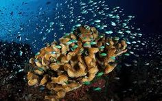colorful underwater images - Google Search Underwater Images, Waterfall, Colorful, Wallpapers, Google Search, Waterfalls, Wallpaper, Backgrounds
