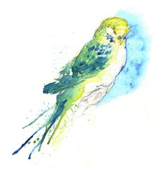 Budgies Series by Amy Holliday, via Behance