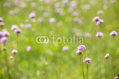 light pink and green wild flowers background