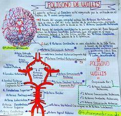 Circle Of Willis, Medicine Notes, Mental Map, Medical Anatomy, Medical Facts, Med Student, Holistic Medicine, Medical Illustration, Med School