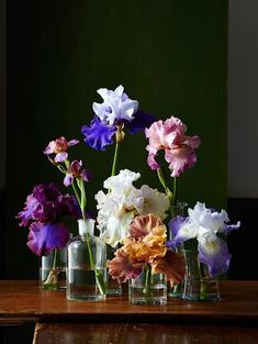 Beard or no beard, there's a lot to love about irises. But even the most dedicated iris-lovers might not know all the fascinating facts about this bulb. Iris Drawing, Iris Bouquet, Iris Rhizomes, Iris Art, Iris Painting, Daisy, Iris Flowers, Boho Flowers, Cut Flowers